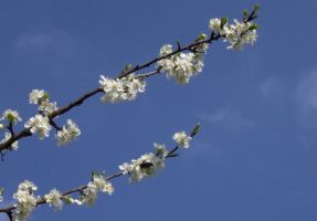 Almond by paolaquasar