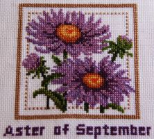 Aster of September by Electra-Maia