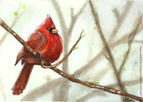 Red Cardinal by Poppysleaf