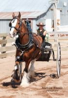 Ladies Clydesdale Cart by AEisnor