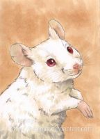 Albino Mouse ACEO by Pannya