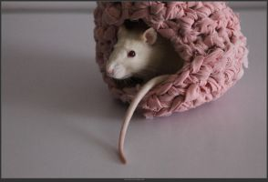 Animal Stock - Rats  (20) by shelldevil