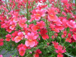 Many red flowers I by Pollon82