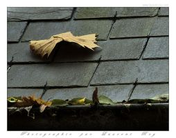 Leaf on a cold roof by laurentroy