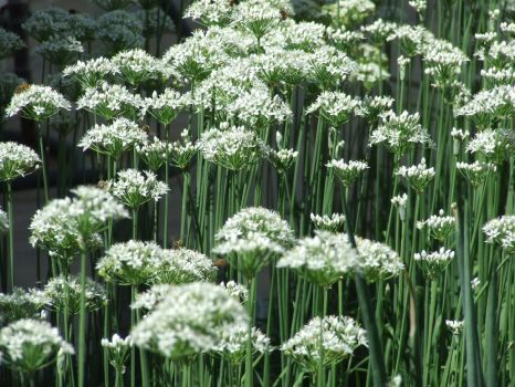 White Flower Plant 1 by dtf-stock