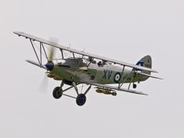 Hawker Hind Display Old Warden by davepphotographer