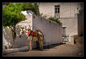 Horse n' donkey in Hydra by etsap