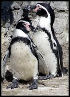 Penguins. by ElectedTheRejected
