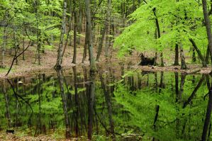 forest mirror I by Wilithin