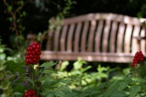 A bench in the background by Eiande