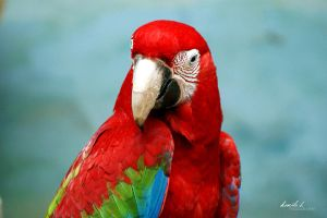 parrot. by kamilla-b