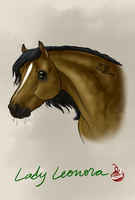 Lady Leonora by CSStables