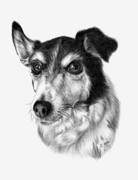Jack Russell X by Fluffinatrix
