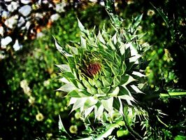 Lomo Like Thistle by JTPepper09