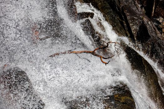 Battered Tree in Eagle Falls, Lake Tahoe by mouthmango