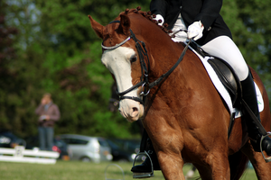 Dressage stock 17 by Bundy-Stock