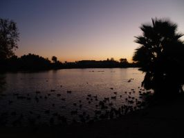 Birds on the Lake at Sunset by CatherineAllison