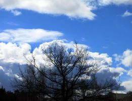 Cloud Tree by anycrow
