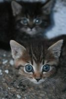 Baby cats by MoxMonica