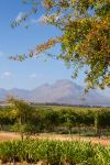 Simonsig Vineyards by parallel-pam