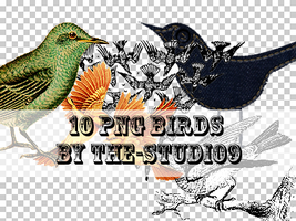 10 Bird PNGs by the-studio9