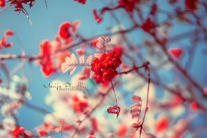Colors of New Year by Piroshki-Photography