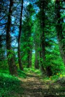 The Enchanted forest by fiamen by Scapes-club