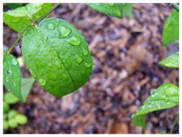 water droplets on a leaf by OhsnapItsMchle