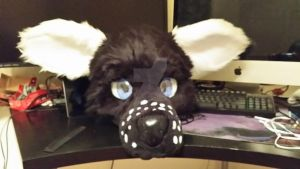 front view (Ears down/normal) by EssPhox
