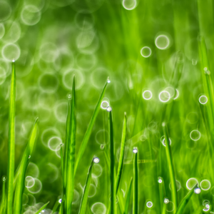 The Greenest Grass by ifsantag