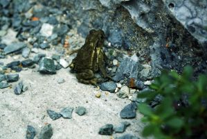 Just a frog. by Wh4T