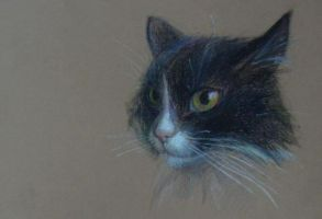 my cat by Xenys