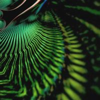 Neon Electric Leaf by worksteady