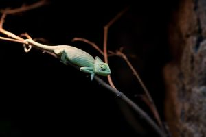 chameleon2 by Drugi