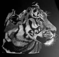Siberian Tiger - WIP2 by shonechacko