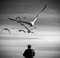 The Man Who Loved Seagulls by ag90