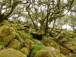 Mossy Forest by Kaymez