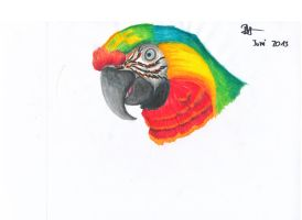 Catalina Macaw by BlueWingArtist