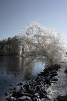 Lovely Lake Crabtree IR V by LDFranklin