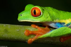 One Last Look by erezmarom