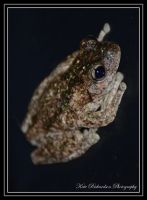 Frog :) by DesignKReations
