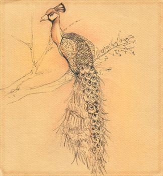 Peacock by Elsouille