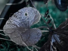Day 327: Heart Shaped Leaves by Kaz-D