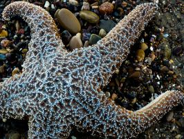 Sea star by jezebel144
