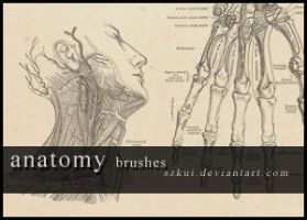 anatomy brushes by szkui