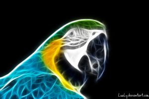 Fractal parrot 2 by Luuky