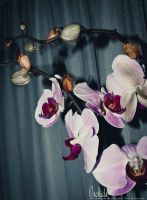 Orchids by JDLuxe