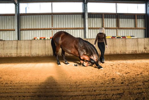 Free Dressage- Bowing II 2046 by LuDa-Stock