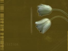 TulipsC by Dody49