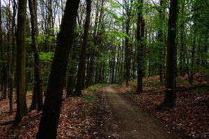 Spring forest path by sahk99